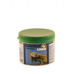 Iguana Juvenil